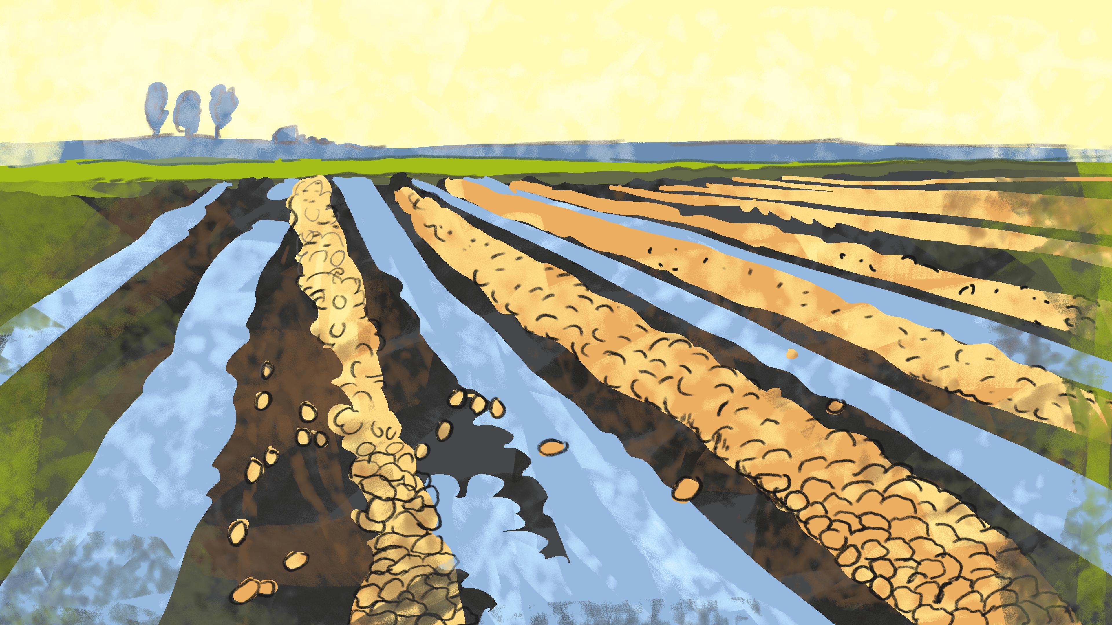 onze boerderij 2020